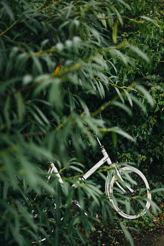 tree white bicycle beside green leaf plants at daytime cambridge