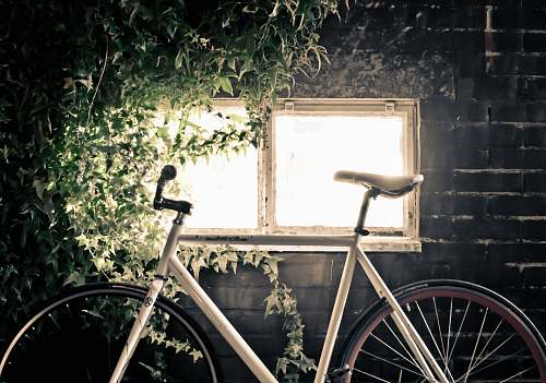 ivy white fixed-gear bicycle inside black room bicycle