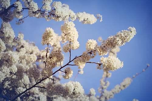 blossom white flowering trees during daytime flower