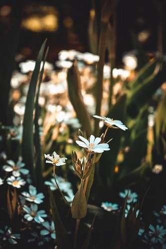 daisy white flowers during daytime daisies