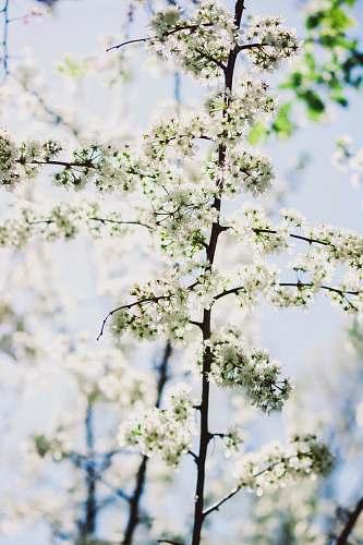 blossom white flowers on focus photography flower