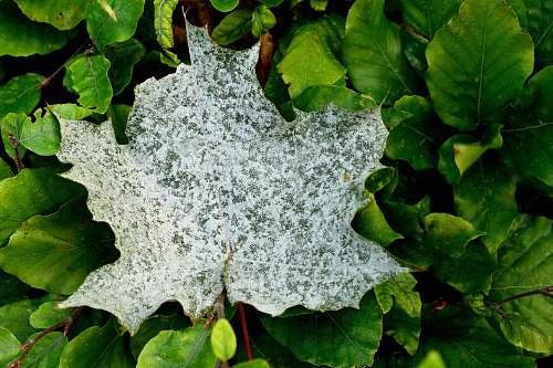 leaf white leaf on green plant veins
