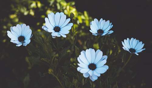 blossom white-petaled flowers flower