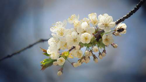 blossom white-petaled flowers on selective focus photography flower