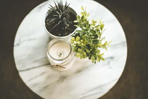photo candle white votive candle near plant pot plants free for commercial use images