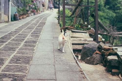 tomb orange and white cat cat