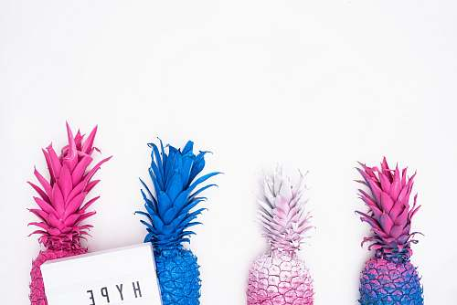 pineapple four assorted-color pineapple illustration blue