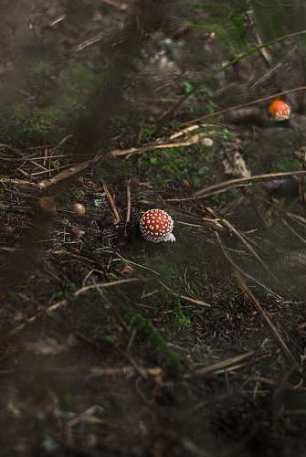 nature mushroom sprout on grass forest