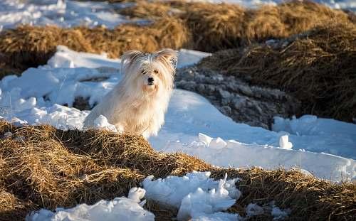 animal beige dog dog