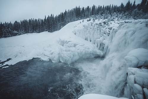 glacier ice falls near the pine tree during daytime ice