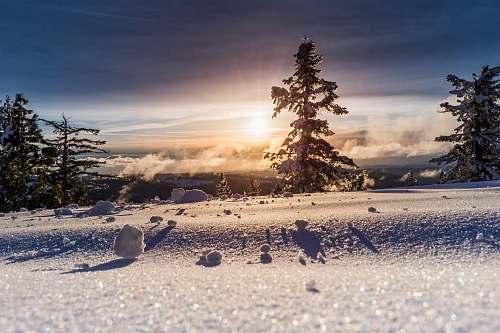 winter low angle photo of snow field tree