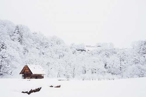 winter snow-covered tree lot during daytime shirakawa