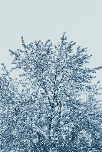 nature tree with snow outdoors