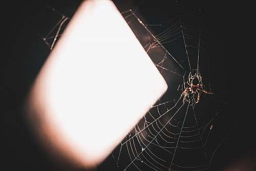warsaw black spider poland