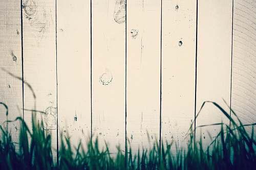 grass green grass near beige wall wood