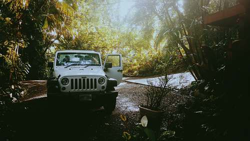 photo offroad white Jeep Wrangler near trees during daytime vehicle free for commercial use images