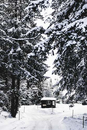 plant black house surrounded by snow during daytime abies