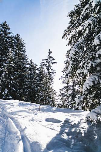 plant green trees during snow abies