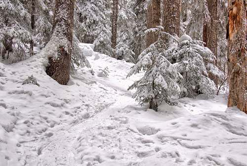 nature low angle photography of snow-covered forest outdoors