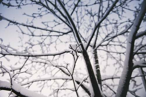 winter selective focus photography of bare tree filled with snow cold