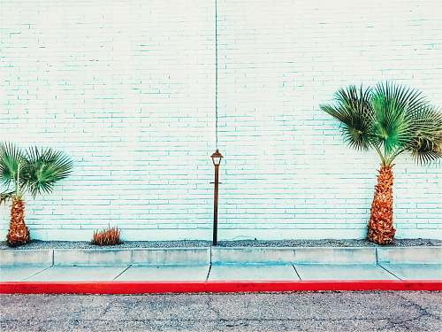 phoenix two palm tree beside the white painted wall united states