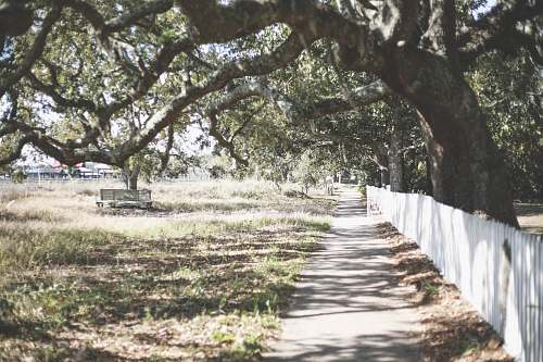 path white wooden fence under green leaf tree bough