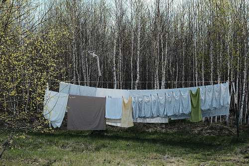 grey gray text hang to dry near forest tress linen