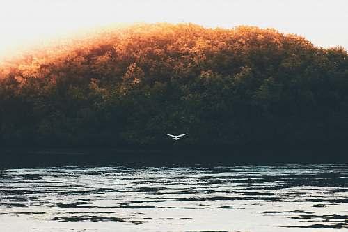 maldives bird flying under the sky lake