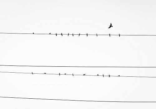 black-and-white birds resting on power line birds