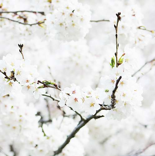 flower closeup photography of white flowering tree blossom