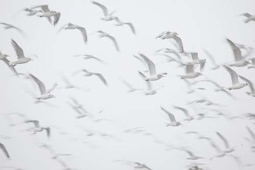 bird flight of birds seagull