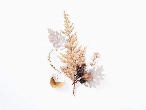 background gold leaf decor in white background brown