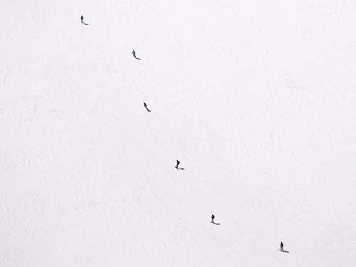 bird low angle photography of flock of flying birds animal