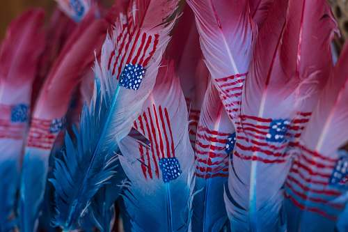 photo blue U.S.A. flag on feathers feather free for commercial use images