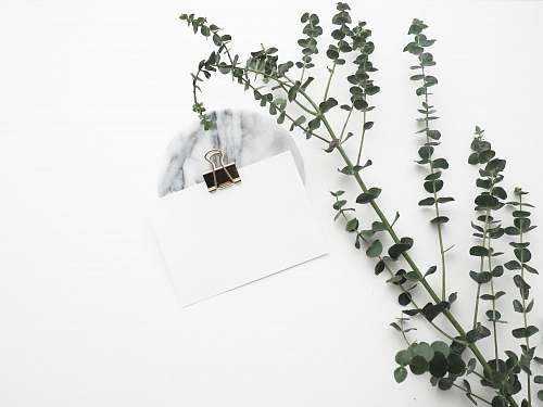 minimal white card with paper clip near plant plant