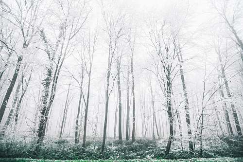 tree white forest view forest