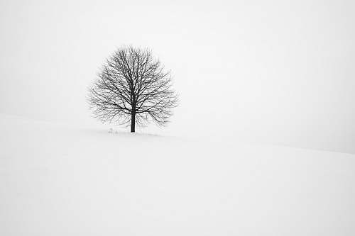 photo black-and-white withered tree surrounded with snow during daytime winter free for commercial use images