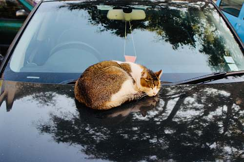 mammal cat on a car during daytime pet
