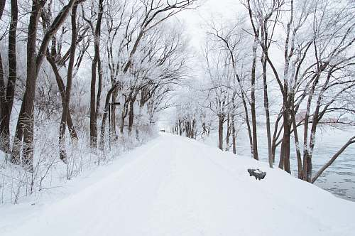 snow dirt road cover by snow nature