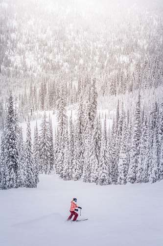 snow person on snow near tall pine trees at daytime outdoors