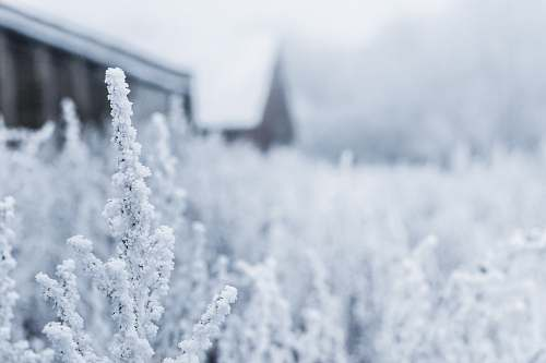 snow white flowers on field frost