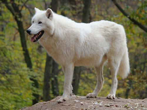animal white dog standing on rock during daytime mammal