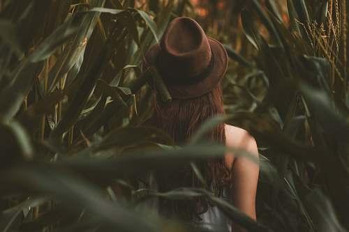 hat  foliage
