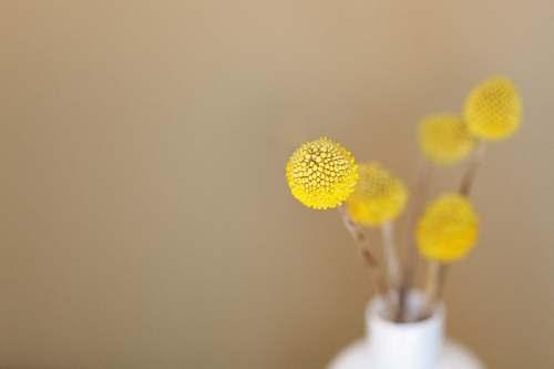 flower macro shot of yellow flower plant