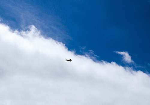bird plane flying under white clouds and blue sky during daytime flying