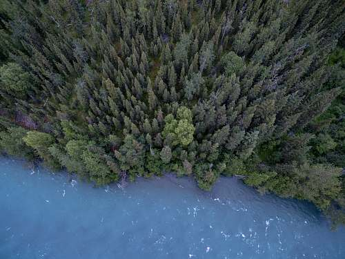 tree aerial photography of trees and body of water trees