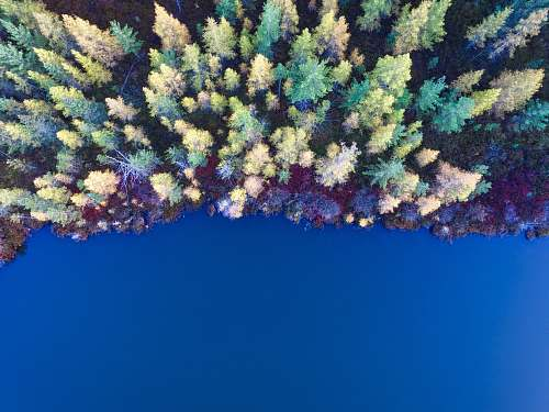 water aerial view of pine tress nature
