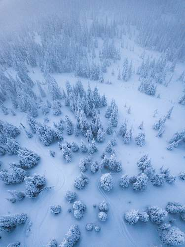 winter aerial view of trees covered with snow whitefish
