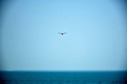 animal bird on flight bird