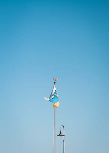 bird bird perched on flag pole with flag during day flag